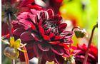 Bodensee Blume