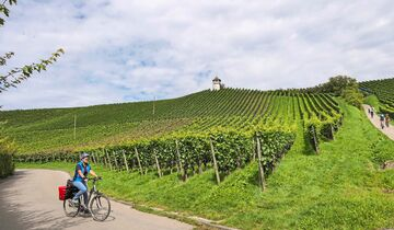 Bodensee Weinberge