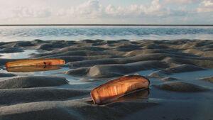 Das Wattenmeer birgt viele interessante Geheimnisse.