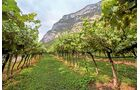 Das Weinanbaugebiet im südlichen Etschtal wurde nach seinen vielen Burgen und Schlössern benannt.