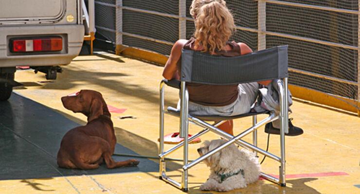 Fähre, hund, haustier,Reisemobil, wohnmobil, caravan, wohnwagen