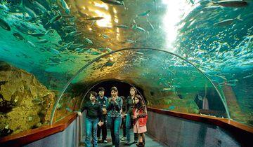 Faszinierendes Ozeanium unter dem man durch einen Glastunnel laufen kann.