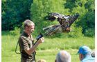 Greifvögel bei der Falknershow auf Burg Rabenstein.