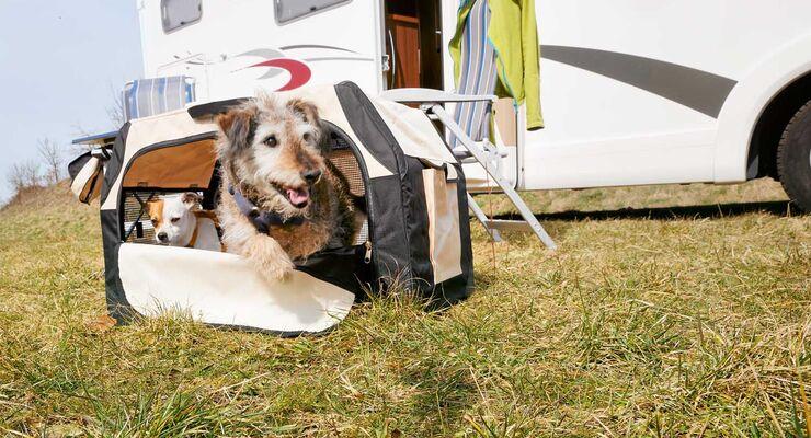 den hund auf reisen im fahrzeug richtig sichern ist. Black Bedroom Furniture Sets. Home Design Ideas