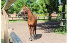 Warendorf ist ein Muss für Fans des Pferdesports.