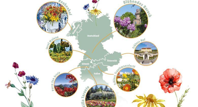 Ziele Blumenfans